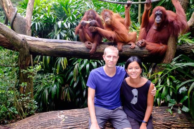 la pose avec les orangs outans