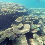 tortue ningaloo reef