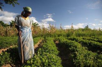Malawi farmer photo