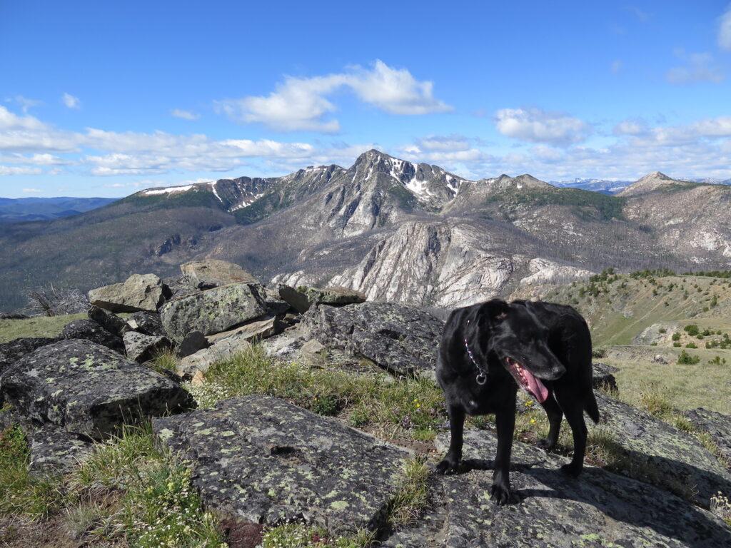 Jake on the top of Pick Peak near Sunny Pass.