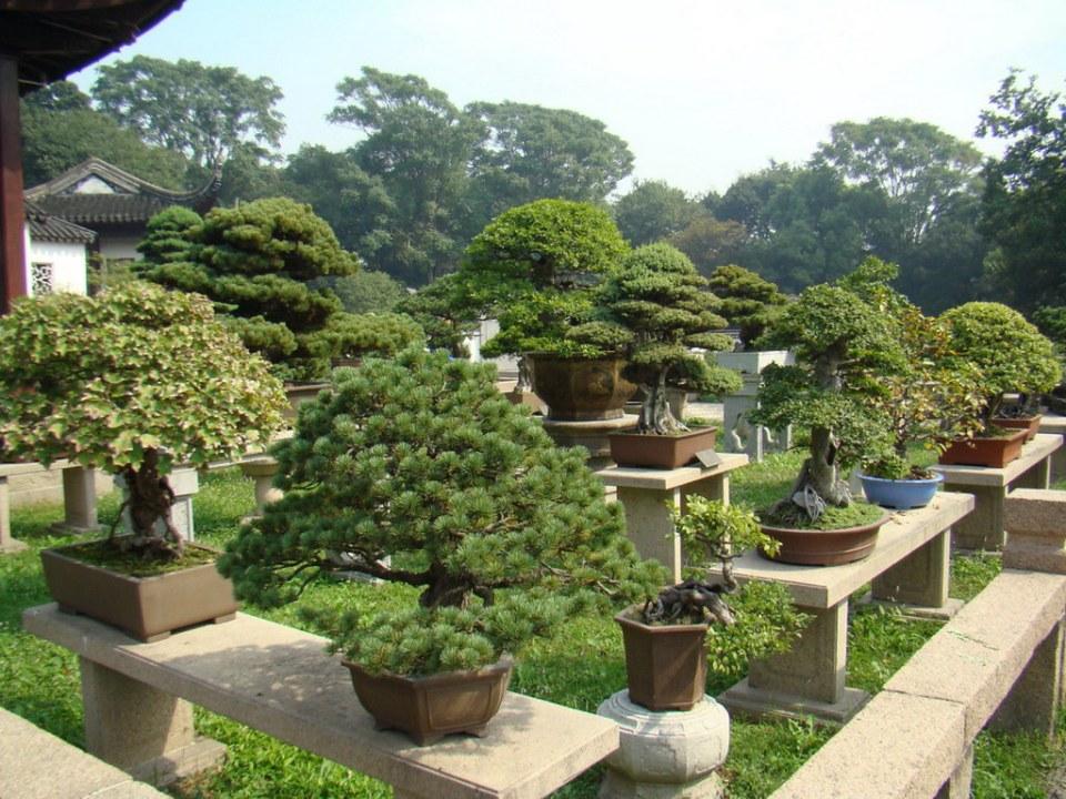 Jardin de Bonsais en Suzhou China 08 Patrimonio de la Humanidad Unesco