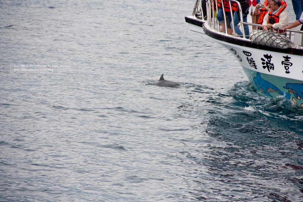 賞鯨很新奇-42 | Sunline Liu | Flickr