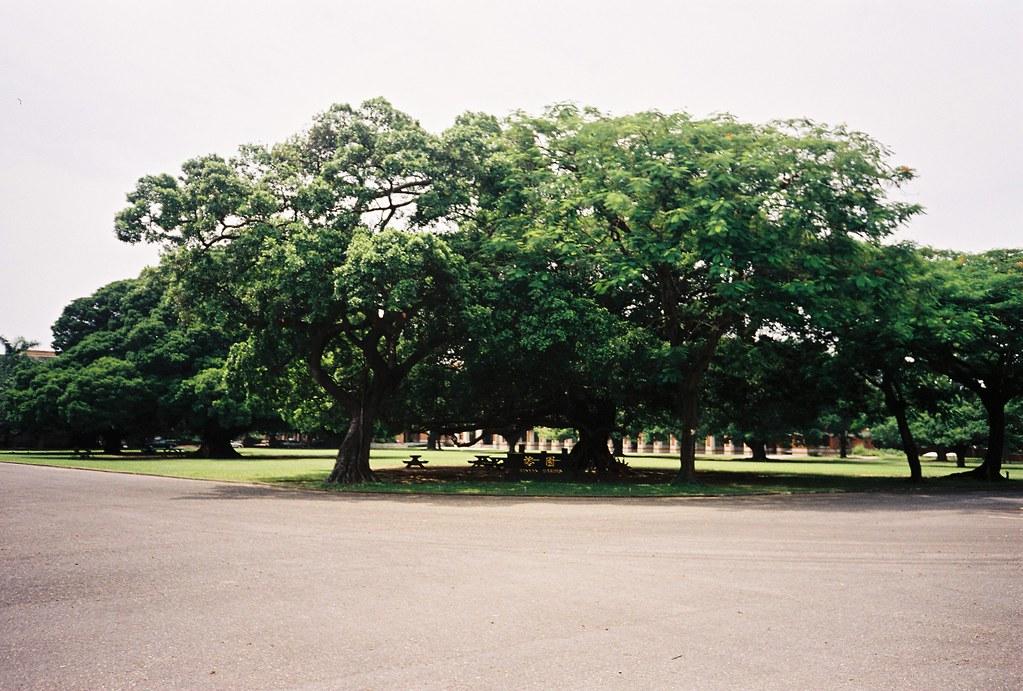 成大大榕樹   Indy Shih   Flickr