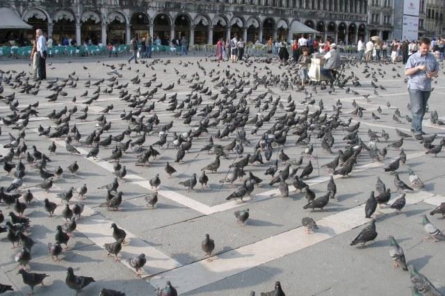 San Marco pigeons (2006-05-580) | Piazza San Marco, often kn… | Flickr