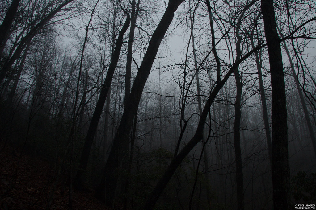 Forest Wallpaper Hd Dark Creepy Trees There S Something Surreal About A