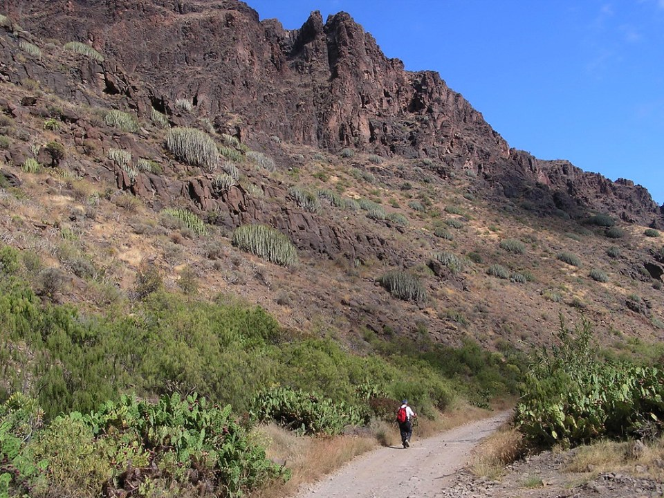 ruta Arteara a Barranco de Fataga Isla de Gran Canaria 114