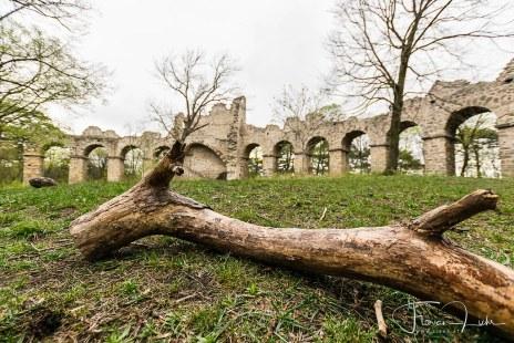 Amphietheater-Ruine im Wald