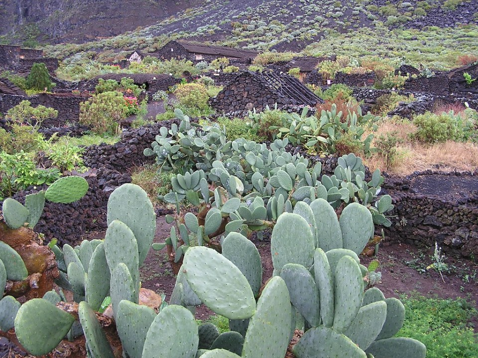 Poblado Guinea museo de Arquitectura Popular Herreña Valle del Golfo bajo el Risco de Tibataje Isla de El Hierro Isla Canarias