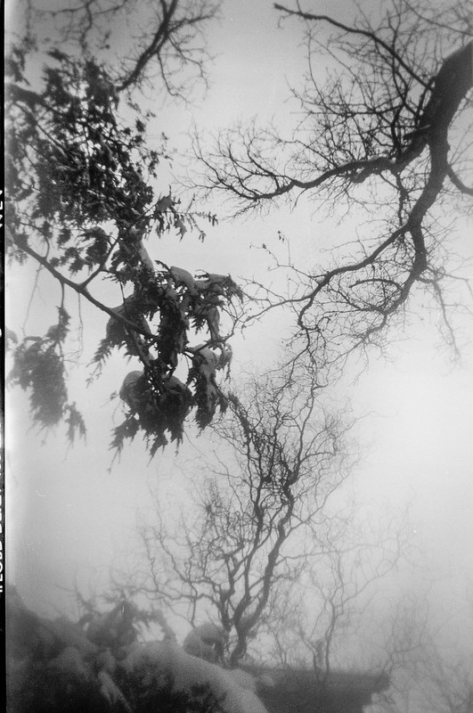 looking up, tree limbs, snow storm, Foldex 20 by Pho-Tak, Ilford Delta 400, Moersch Eco Film Developer, 1.22.16