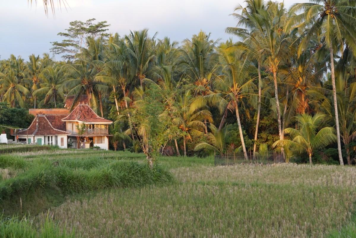 Matkustaisin nyt Balin Ubudiin