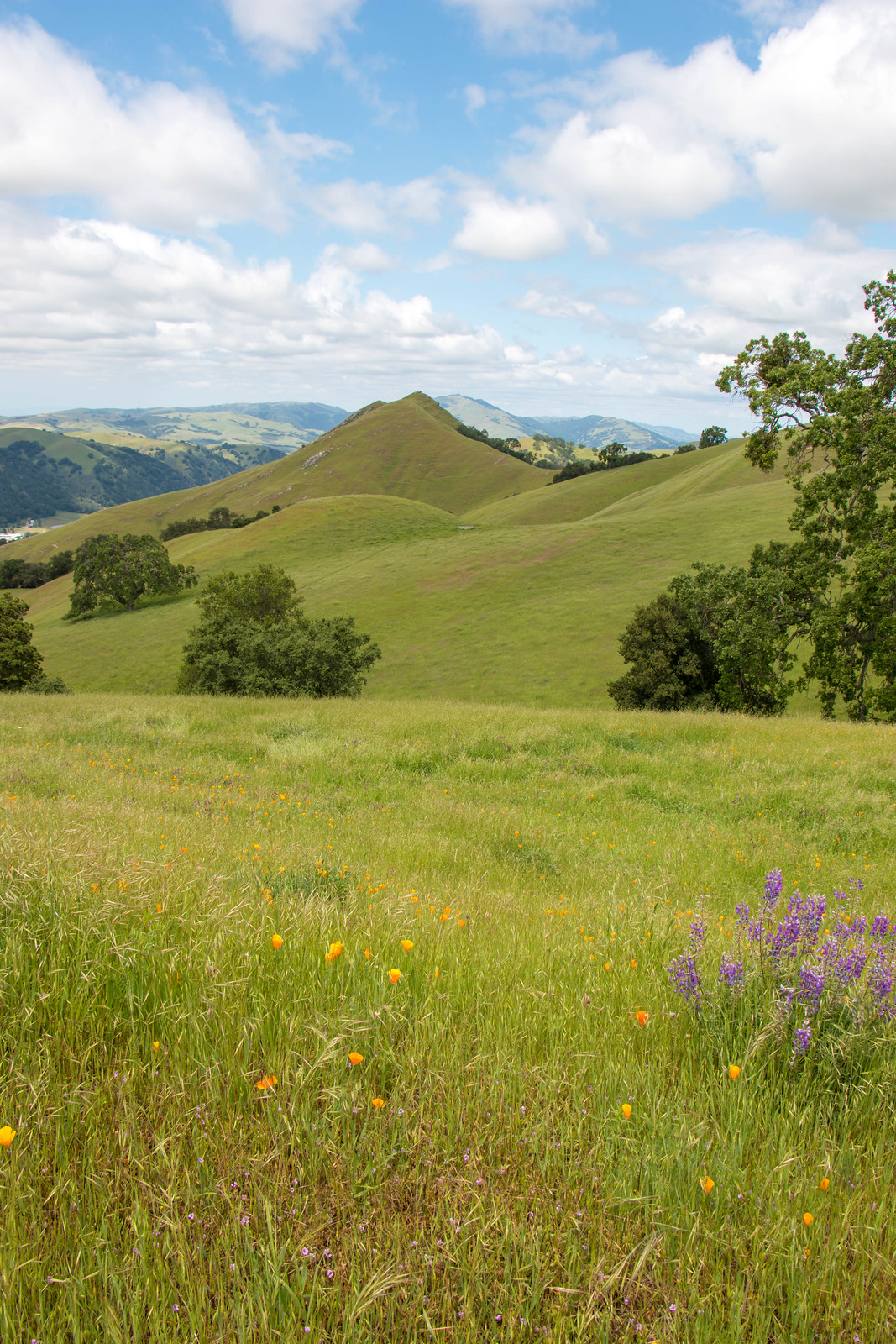 04.24. Sunol Regional Wilderness
