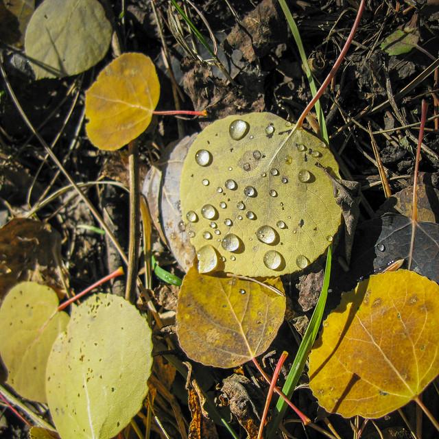 Picklejar Lakes Hike-2893