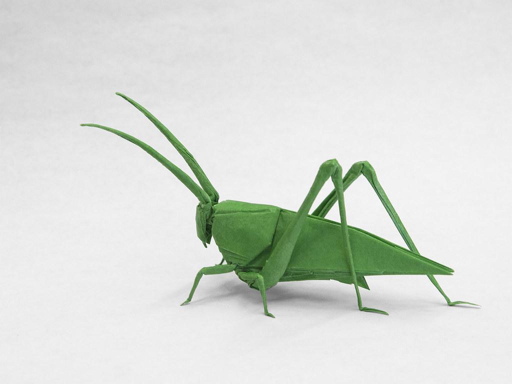 hight resolution of  katydid hp by robert j lang by overha