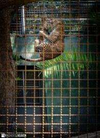 Barcelona Zoo - 0270