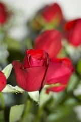 Rose DOF
