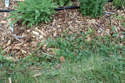 Garden Edging Continued | Perennial Bed Borders - Terrific Broth