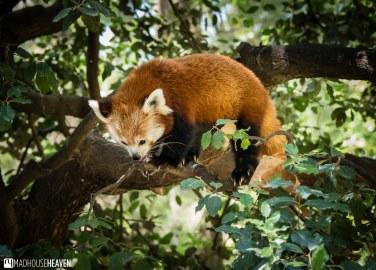 Barcelona Zoo - 0139