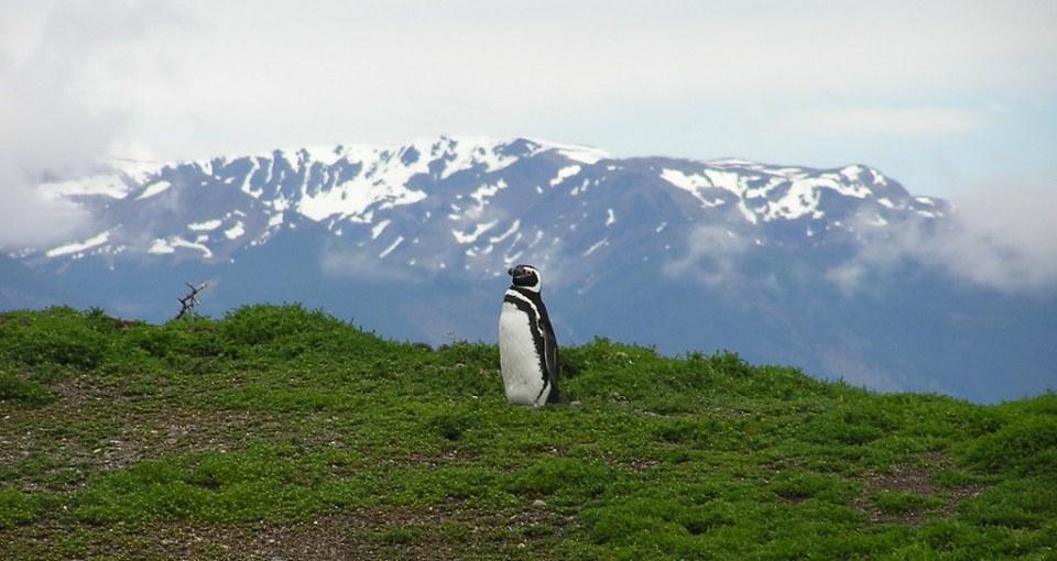 Pinguinos Isla Gable Canal Beagle Ushuaia Argentina 117