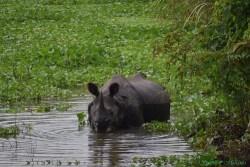 Kaziranga National Park photo