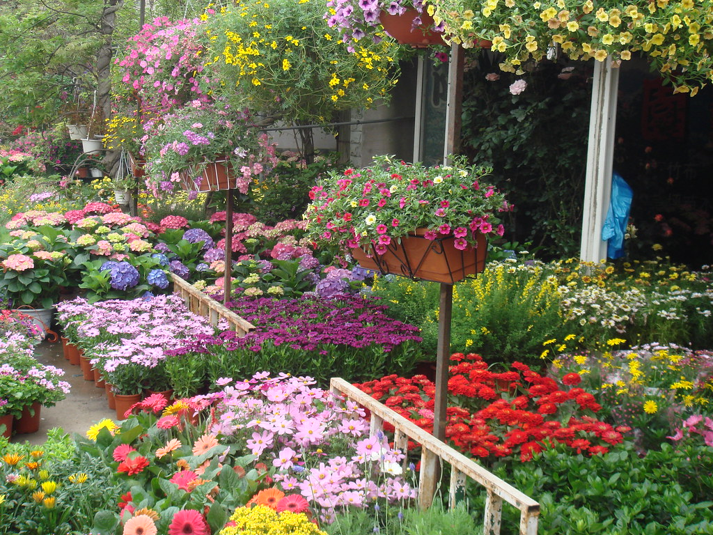 beautiful flower@Hongqiao flower market | 萬紫千紅總是春,春天的花兒燦爛的開放… | Zeping Yang | Flickr