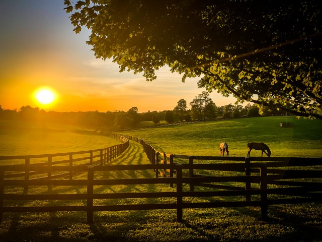 Kentucky horses grazing at sunset