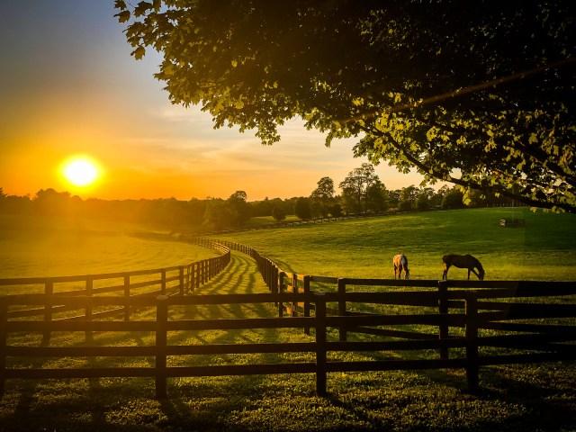 Kentucky horses grazing at sunset