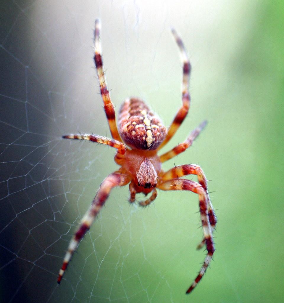 spider | Oregon Trading Post | Flickr