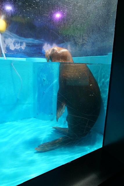 2018 CCA Investigation into Guangzhou Grandview Aquarium