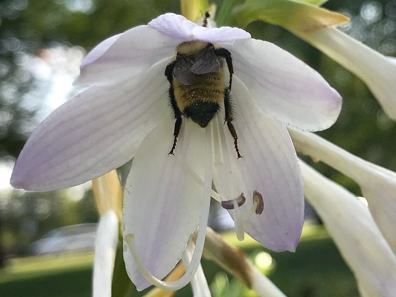 Bee with flower hat