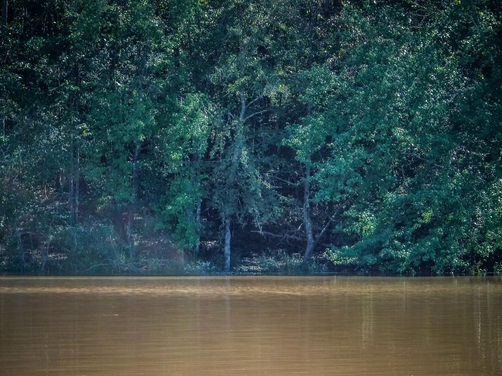 Boyd Mill Pond-74
