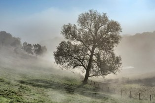 *only a tree in the fog*