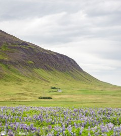 Iceland - 1358