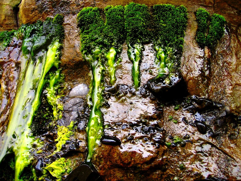 Algae And Other Non Vascular Plants