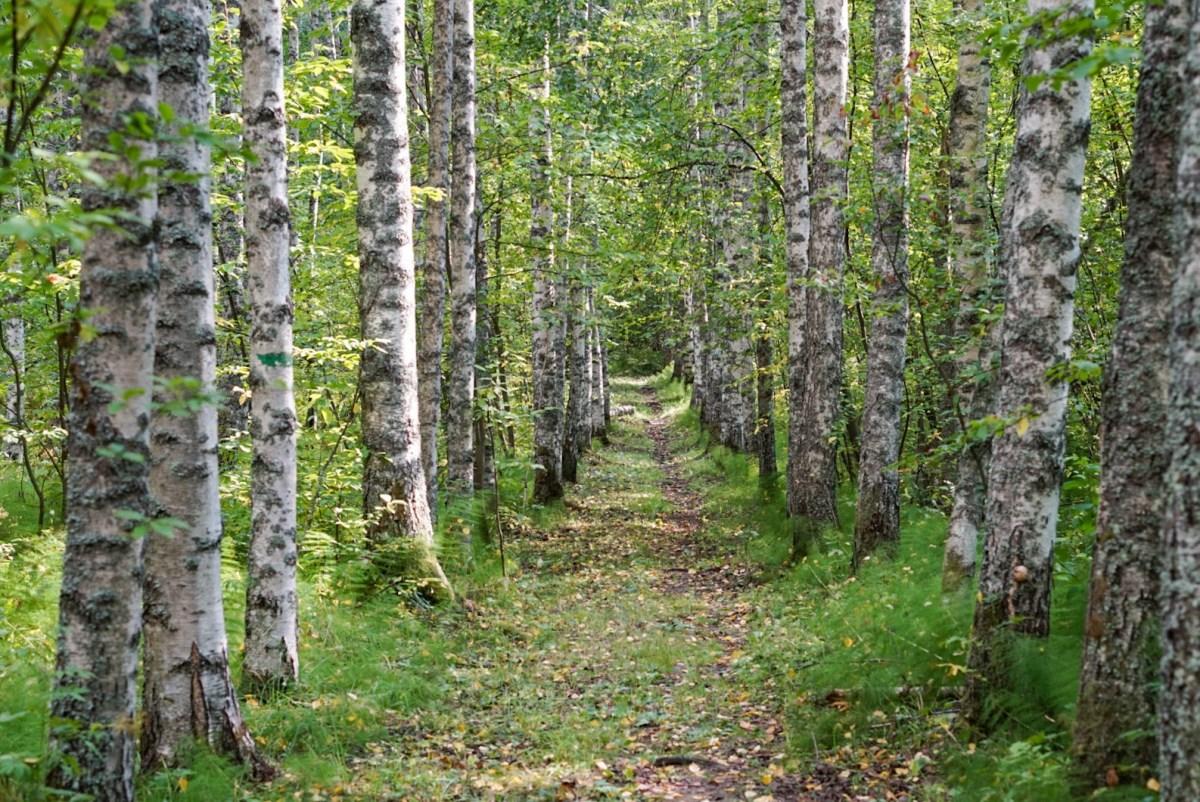 Halmejoen luontopolku, Kuopio