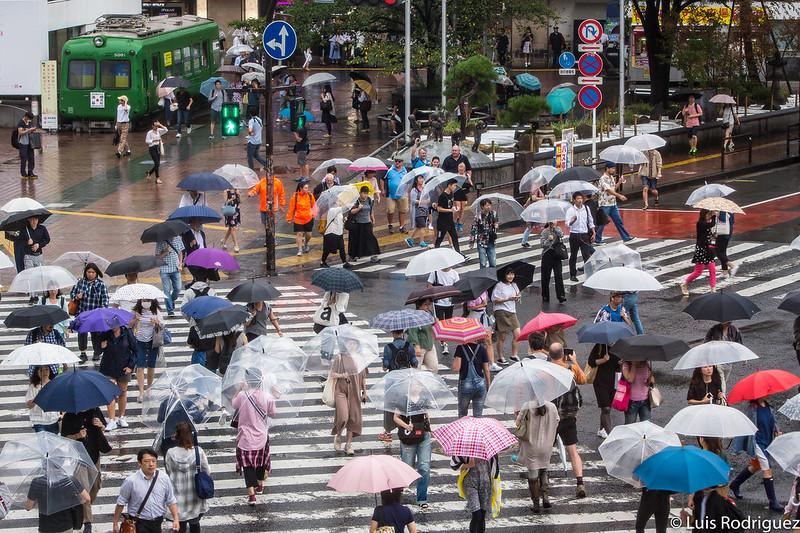 """Imagen muy """"Lost in Translation"""" con la gente cruzando el paso de peatones con los paraguas"""