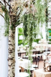 0048.2pt Natural-Outdoor-Wedding-Decor-Birch-Alder-Tree-Spanish-Moss (2)