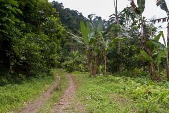 Na Santa Catarina gaat de weg onverhard verder door koffie en cacoa plantages.