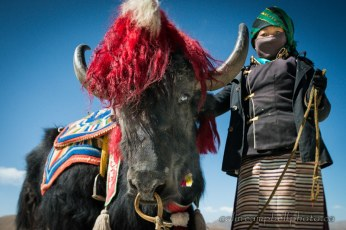 A Woman and her Yak for Hire