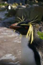 penguin - crazy hair steve malone