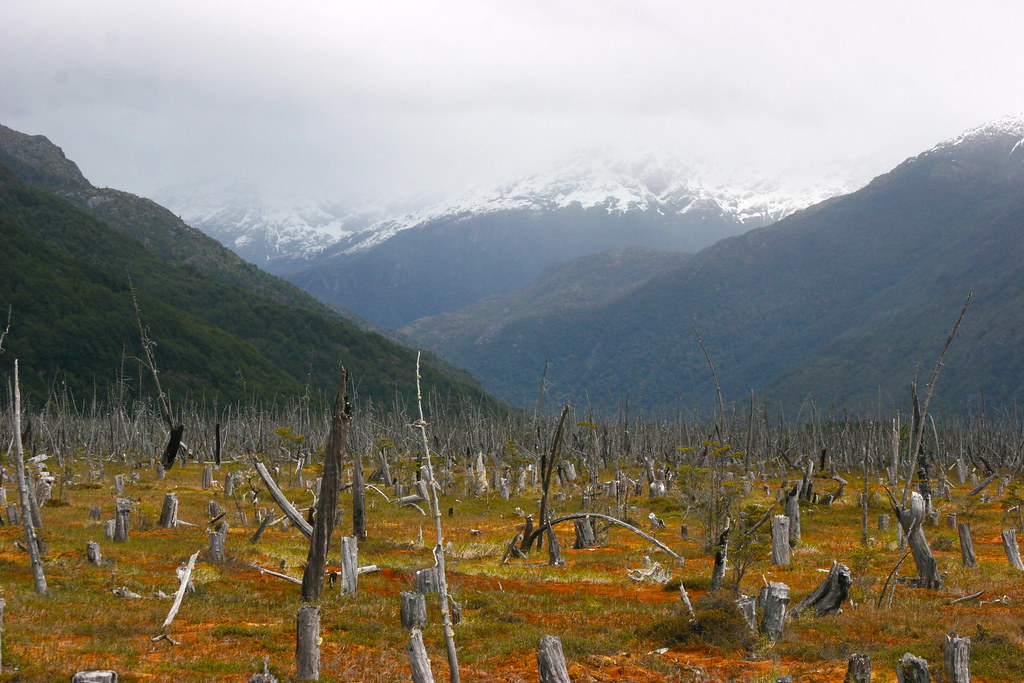 Patagonia Chile Signs Of Deforestation Landscape Seen