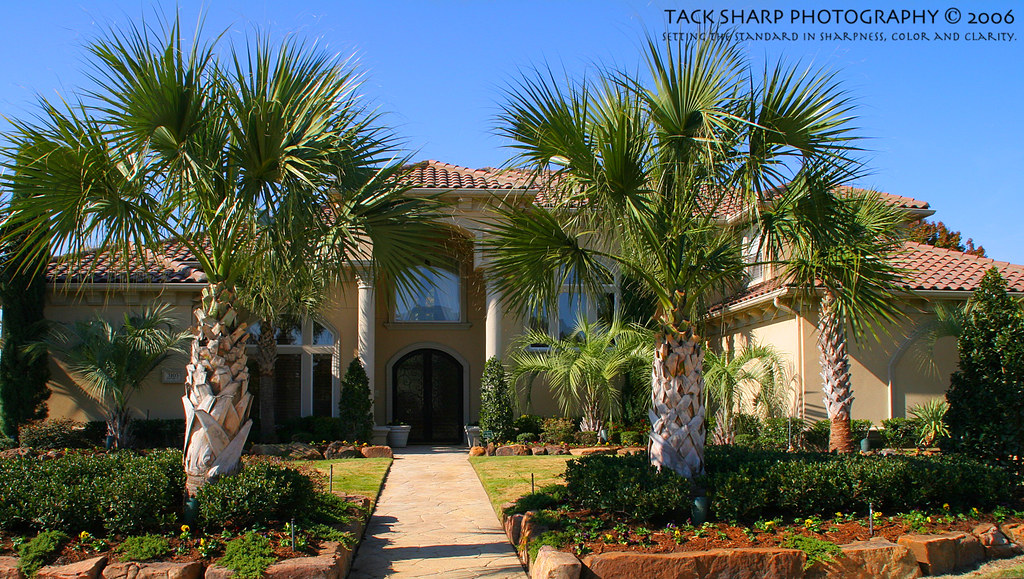 Stucco House With Palm Trees Mediterranean House