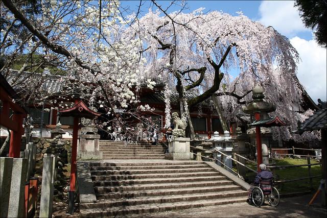 S T A I R S : Himuro Shrine