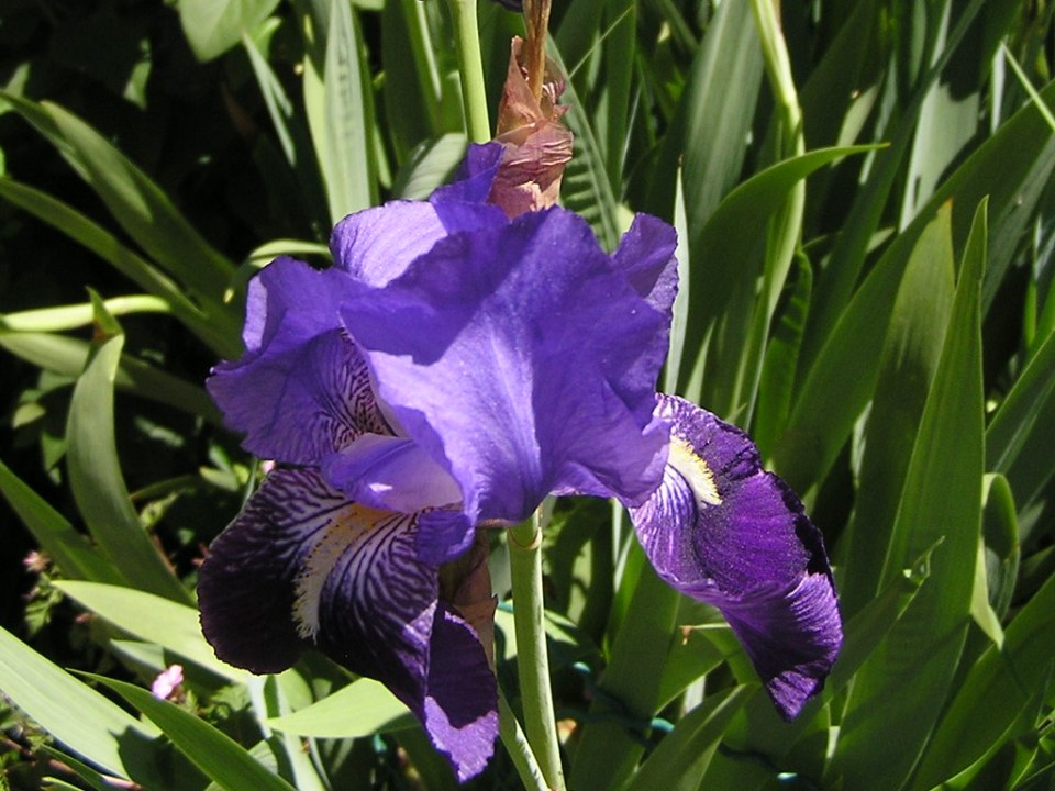 flores Pirineo Catalan 49