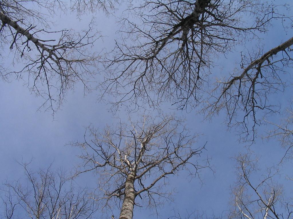 Look Up Waaaay Up 1