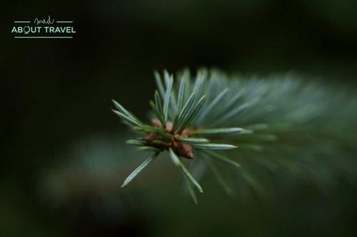Cardrona-forest-polonez-09