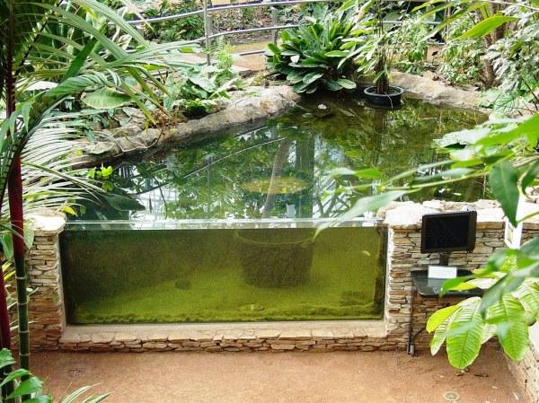 aquarium in huntington garden