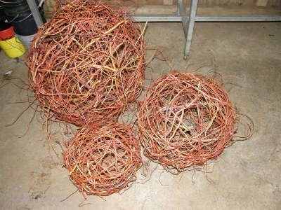 Globes, Red Curly Willow
