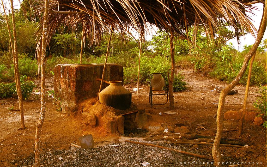 distilling cashew fenny