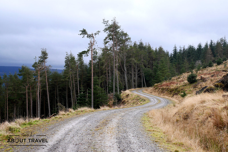 Cardrona-forest-11
