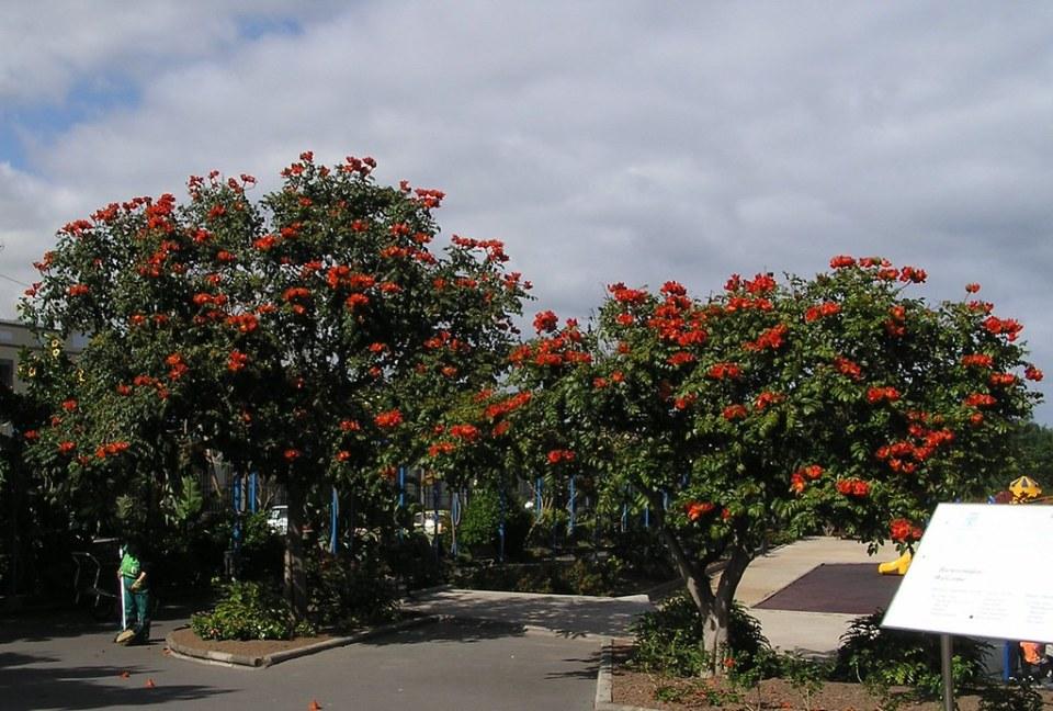 Telde Parque de San Juan isla de Gran Canaria 16